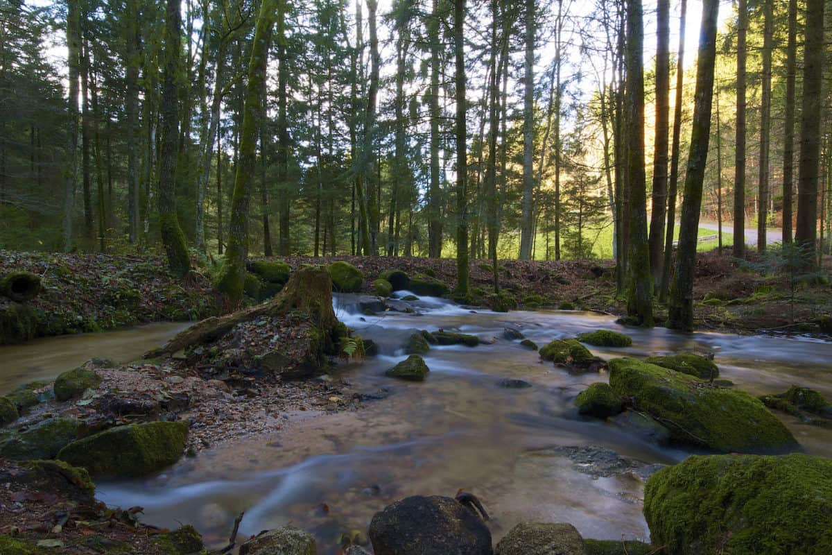 Westweg - Black Forest