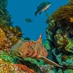 Scuba Diving Catalina Island, California
