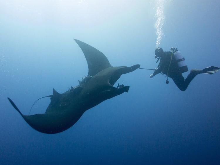 scuba diving socorro