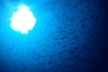 Scuba Diving Komodo Island Indonesia