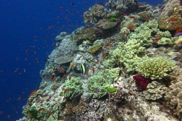 Scuba Divinf Fiji