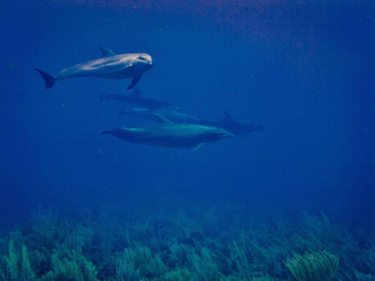 Scuba Diving Ambergris Caye
