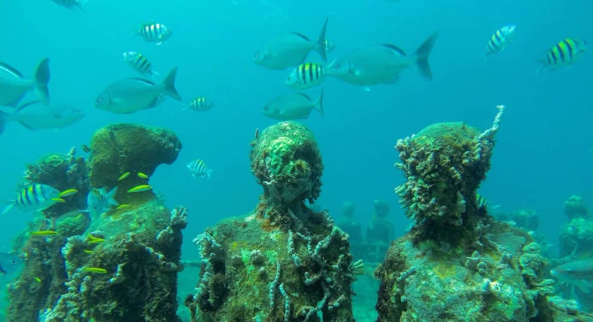 Snorkeling at the underwater park