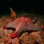 scuba diving coiba island panama