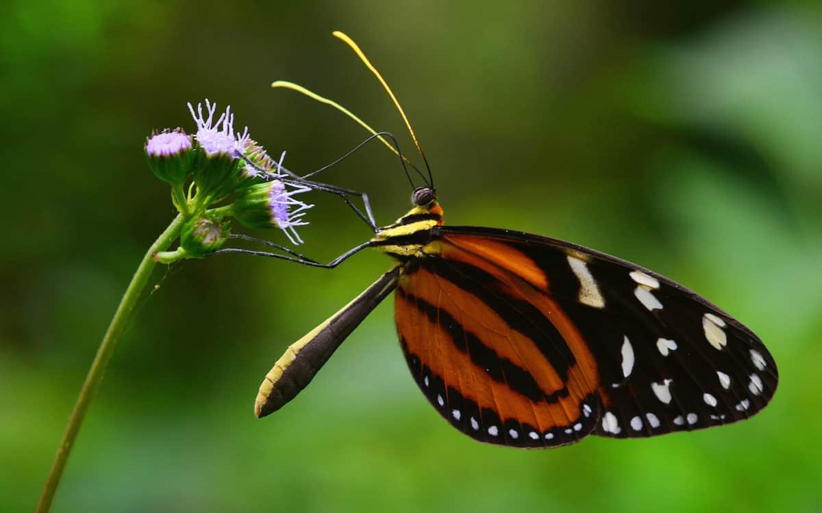 Darien National Park - Panama