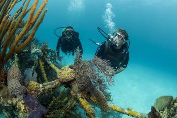 scuba diving buddy system