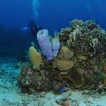 Roatan Diving: Scuba Diving iin Honduras
