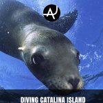 Scuba diving in Catalina Island