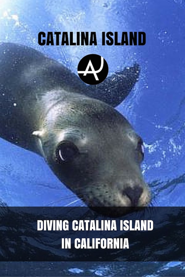 Scuba Diving Catalina Island, California - The Adventure Junkies