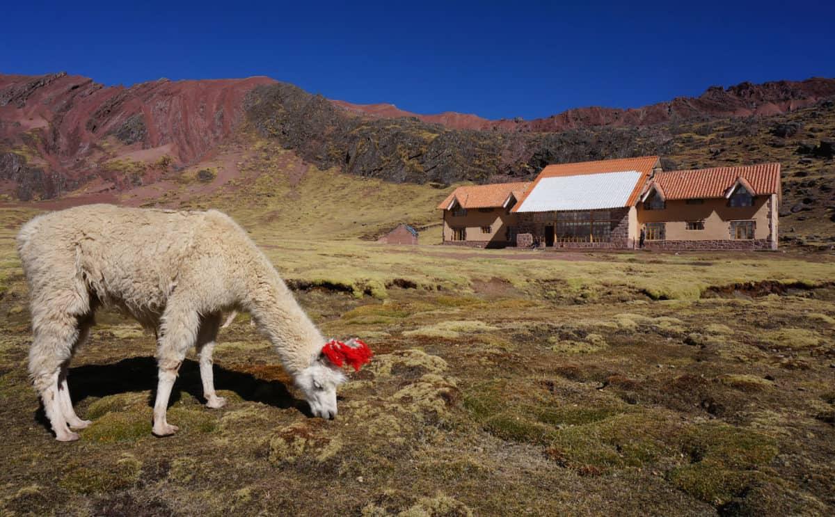 andean lodge llama