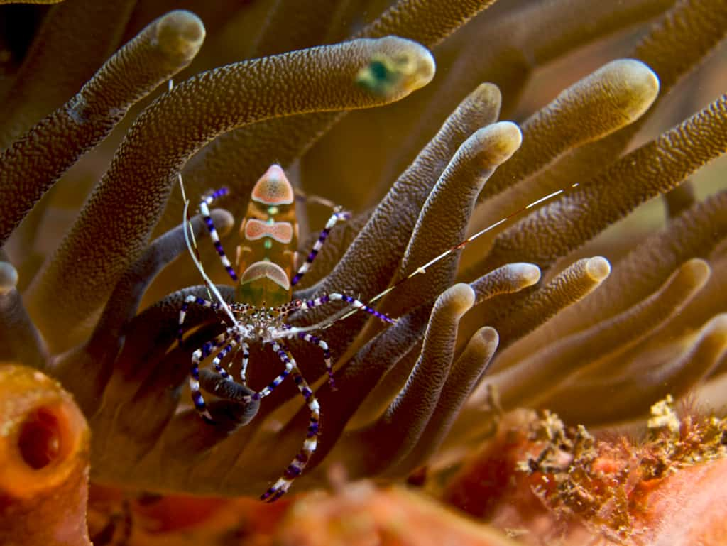 Best macro diving in the world