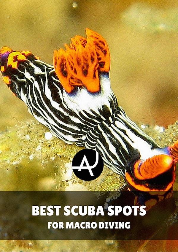 Best dive spots for macro diving