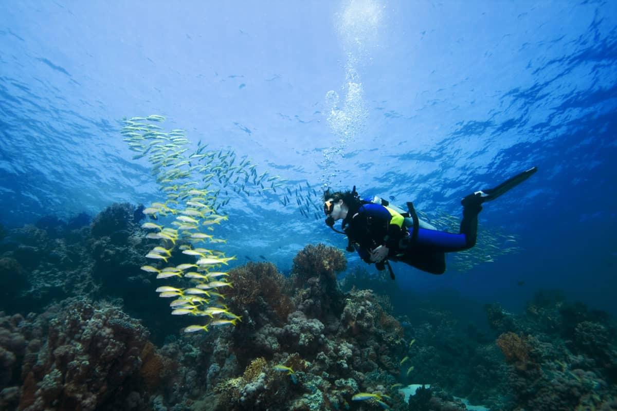 Diver and Goatfish