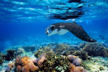 best scuba diving sites in South America