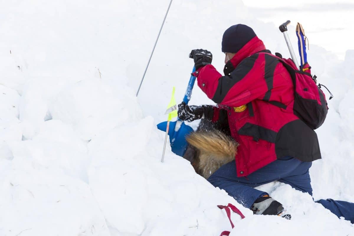 best avalanche probe