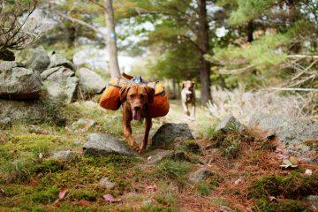 best dog hiking packs
