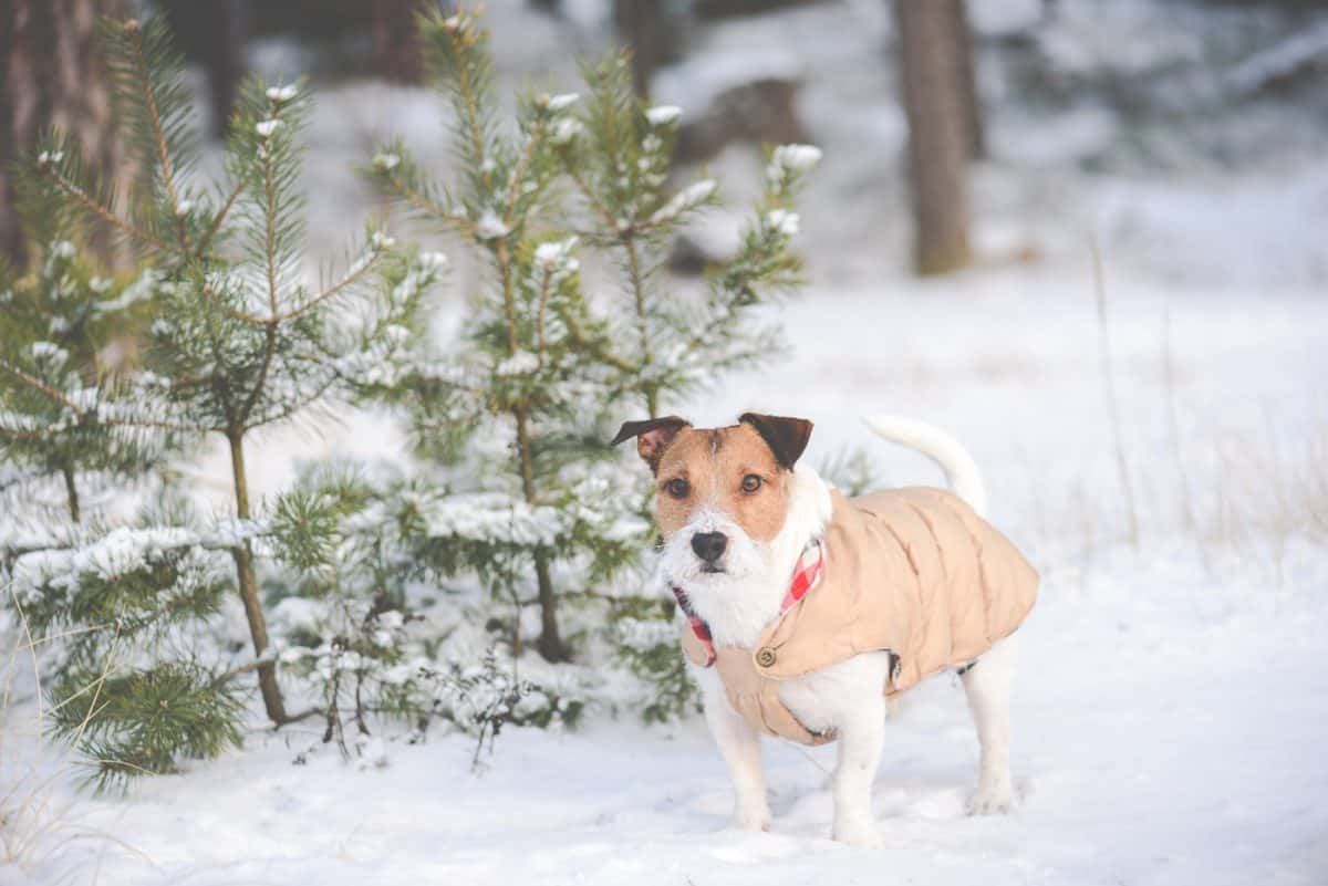 best dog jackets