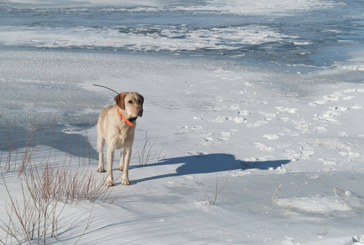 best GPS tracker for dog