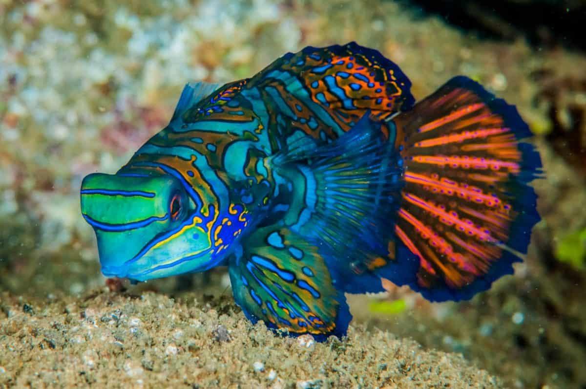 best liveaboard destinations for macro diving