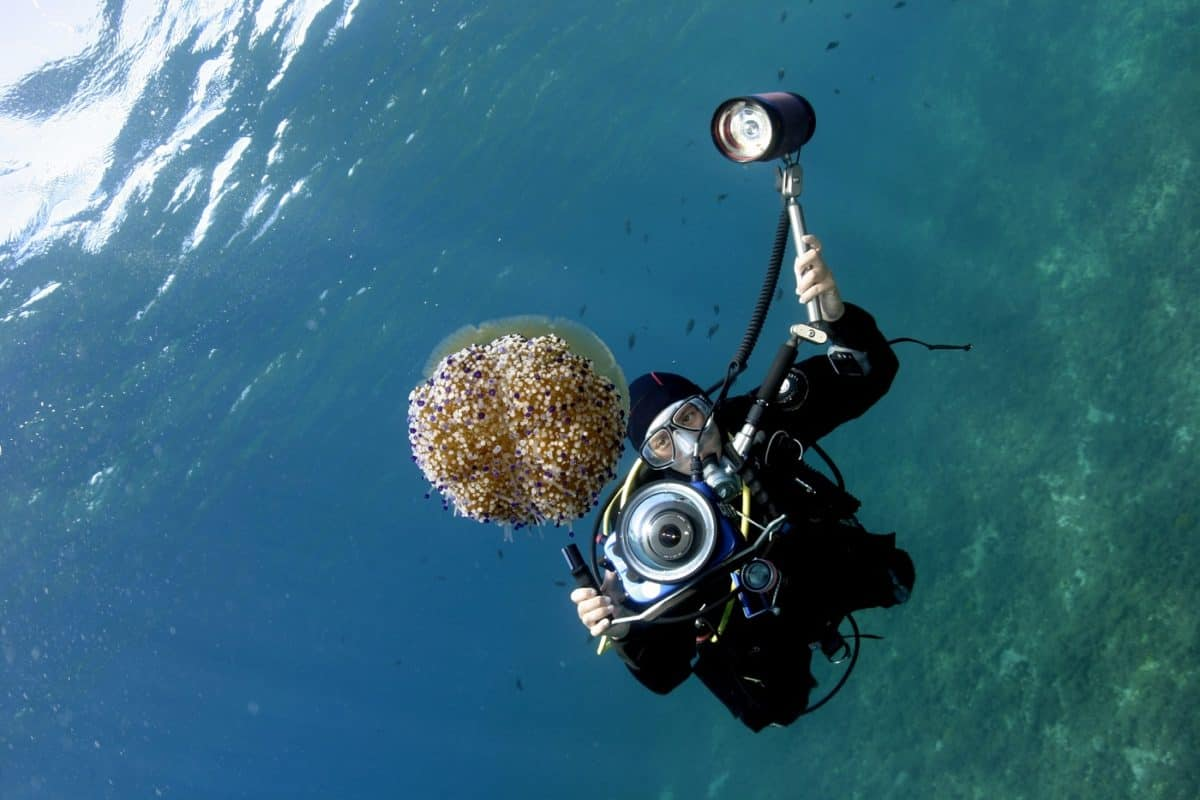 best liveaboard destinations for underwater photographers