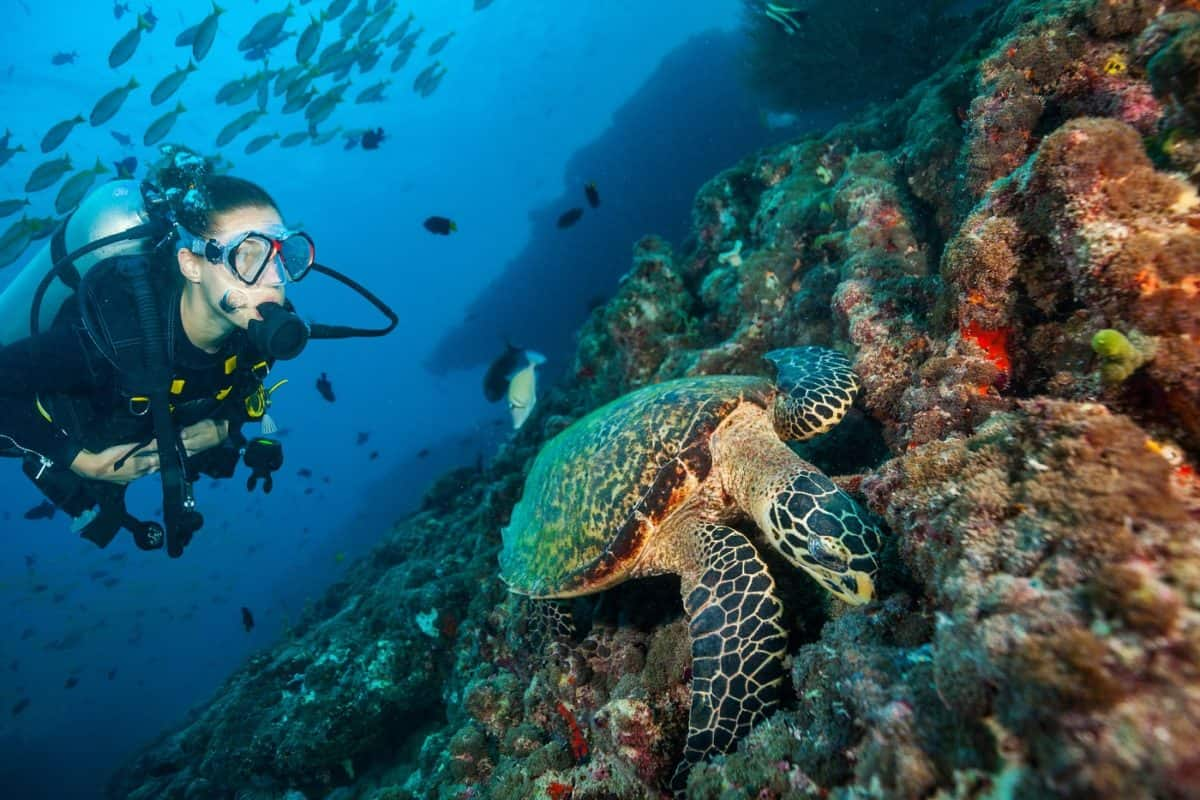 where to go for short diving liveaboard trips
