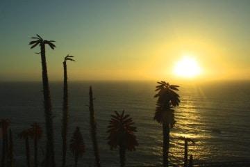 california trip report