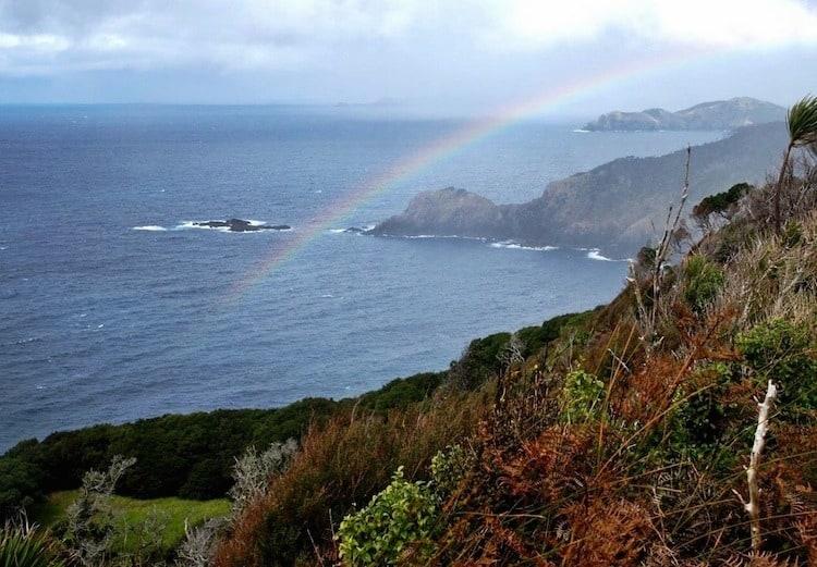 The Best Overnight Hike in Northland: Cape Brett, New Zealand