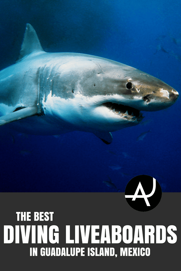 Guadalupe Island Liveaboard - Best Scuba Diving Destinations - Diving Bucket List - Adventure Vacations - Beautiful Locations and Places to Dive