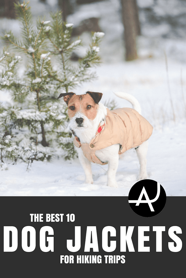 Best Dog Jackets - Hiking Tips For Beginners – Backpacking Tips and Tricks for Women and Men
