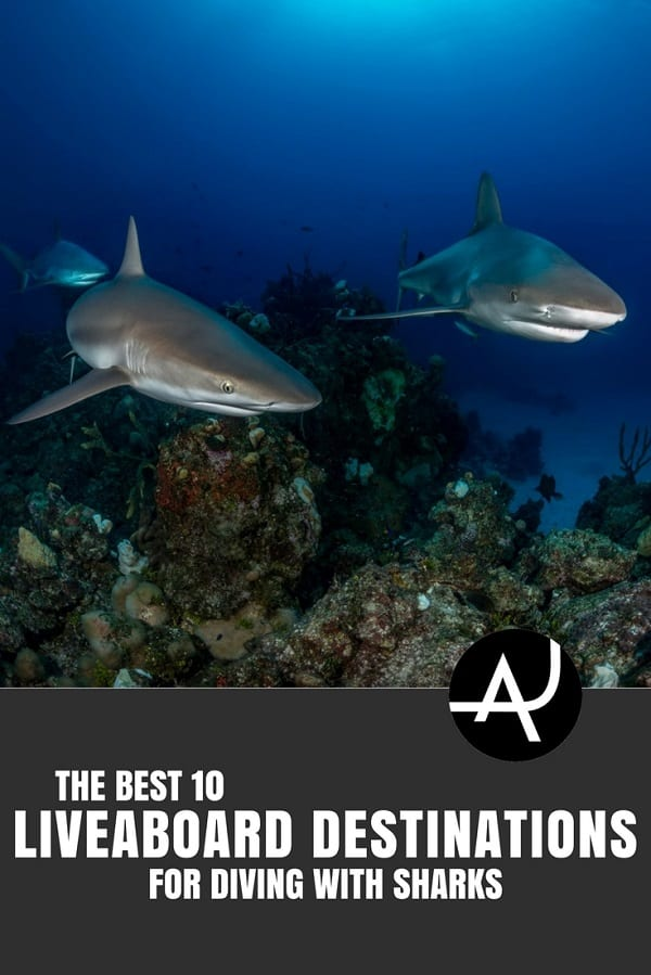 Best Liveaboard Destinations for Diving with Sharks - Best Scuba Diving Destinations - Diving Bucket List - Adventure Vacations - Beautiful Locations and Places to Dive