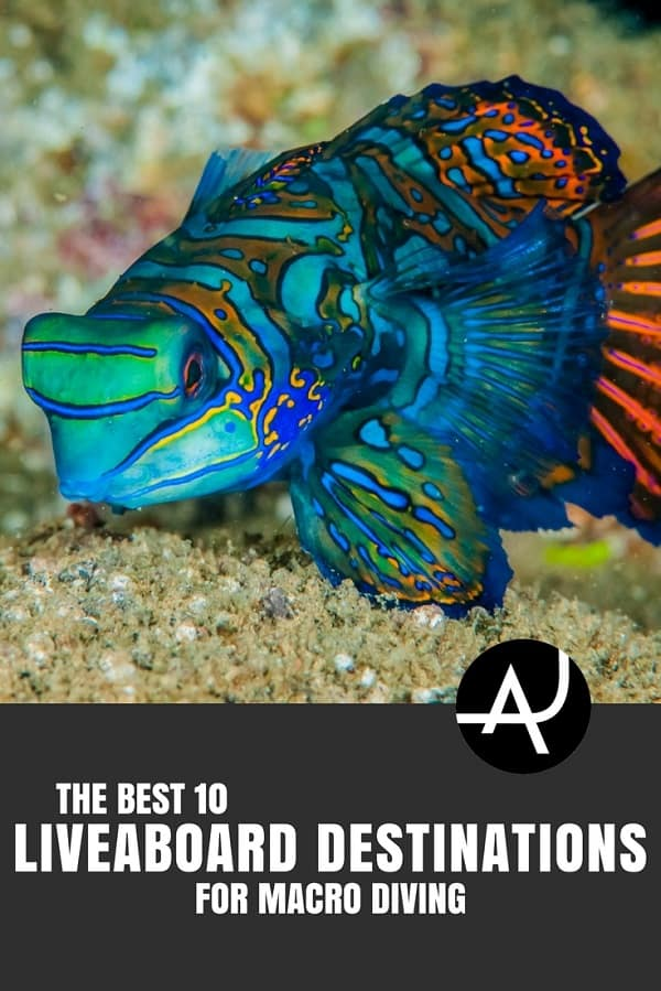Best Liveaboard Destinations for Macro Diving - Best Scuba Diving Destinations - Diving Bucket List - Adventure Vacations - Beautiful Locations and Places to Dive