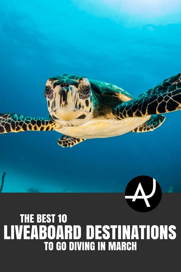 Best Liveaboard Destinations to Go in March - Best Scuba Diving Destinations - Diving Bucket List - Adventure Vacations - Beautiful Locations and Places to Dive