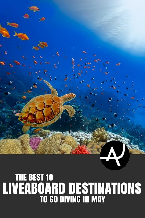 Best Liveaboard Destinations to Go in May - Best Scuba Diving Destinations - Diving Bucket List - Adventure Vacations - Beautiful Locations and Places to Dive