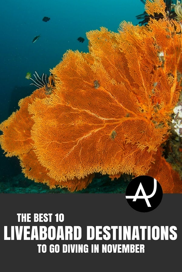 Best Liveaboard Destinations to Go in November - Best Scuba Diving Destinations - Diving Bucket List - Adventure Vacations - Beautiful Locations and Places to Dive