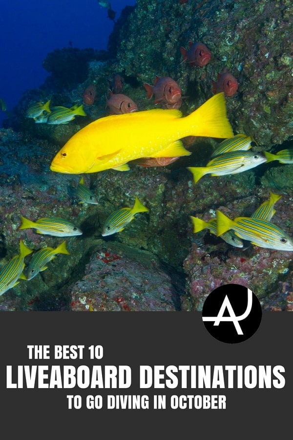 Best Liveaboard Destinations to Go in October - Best Scuba Diving Destinations - Diving Bucket List - Adventure Vacations - Beautiful Locations and Places to Dive