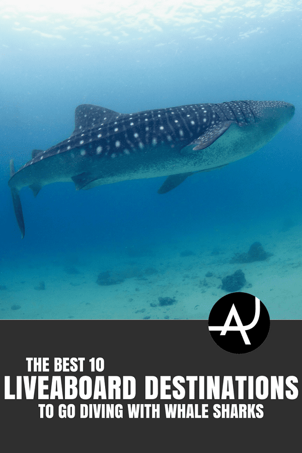 Best Liveaboard Destinations for Diving with Whale Sharks - Best Scuba Diving Destinations - Diving Bucket List - Adventure Vacations - Beautiful Locations and Places to Dive