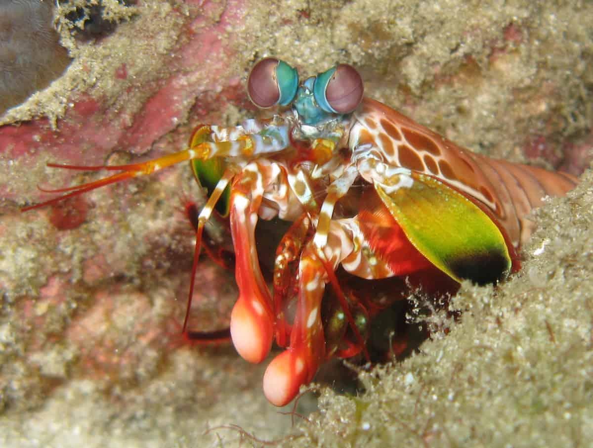 Diving Adaman Sea - Thailand