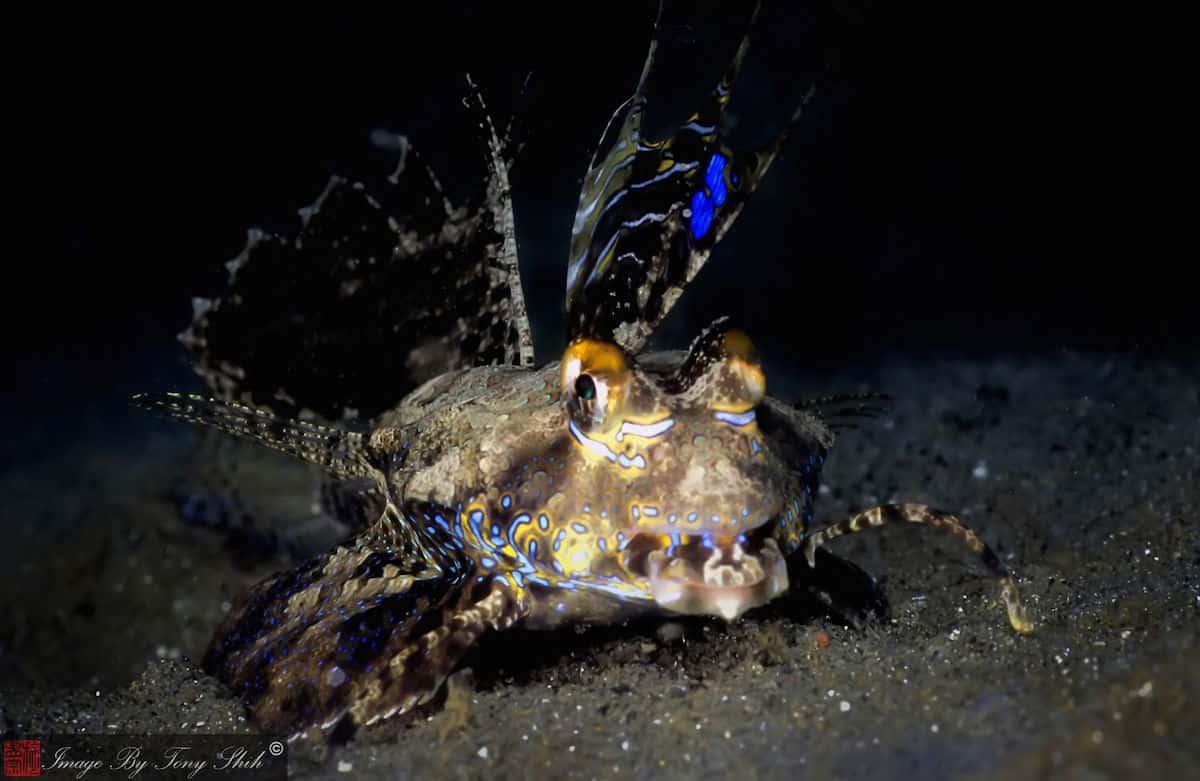Diving Ambon - Indonesia
