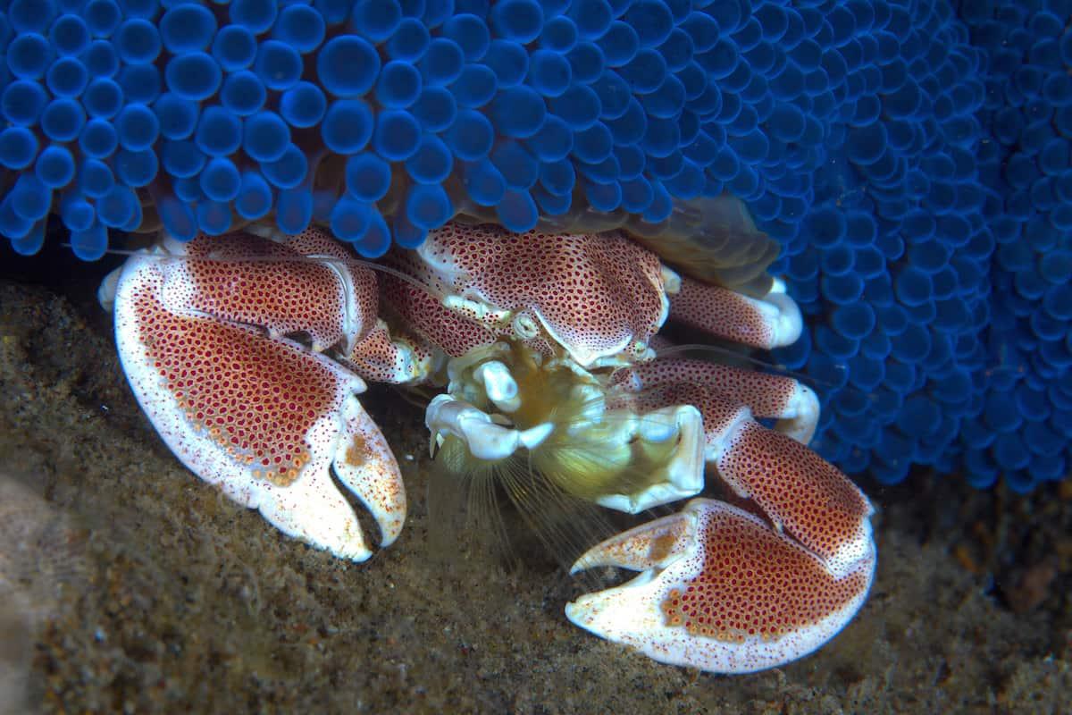 Diving Dauin - Philipines