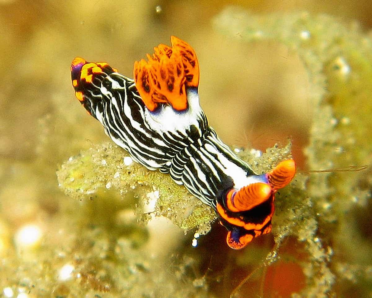 Diving Lembeh Strait - Indonesia
