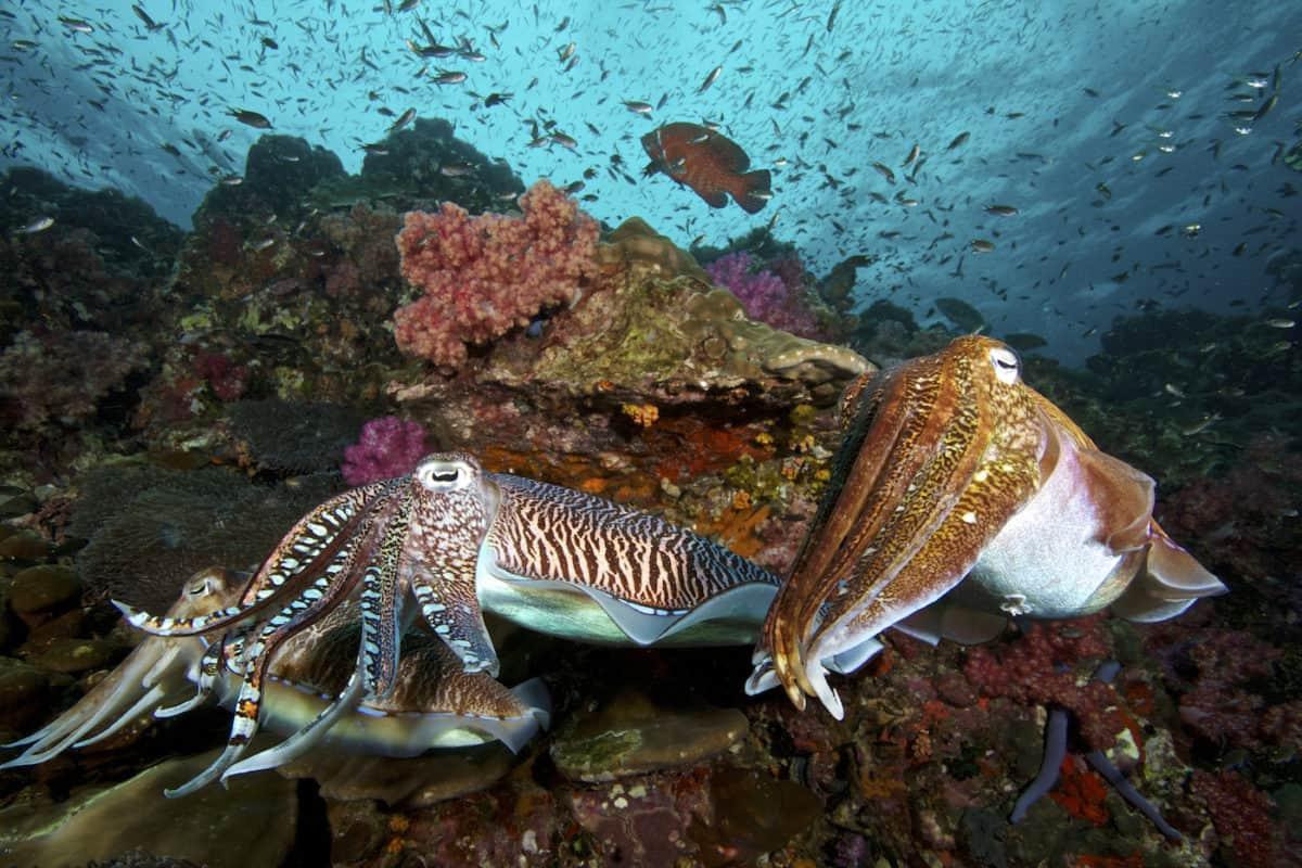 Diving Liveaboard Burma
