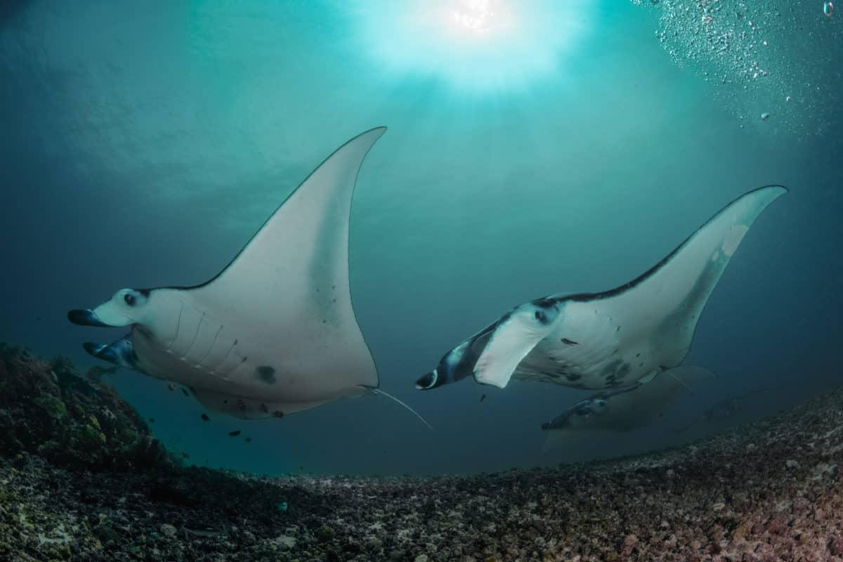 Diving Liveaboard Komodo, Indonesia