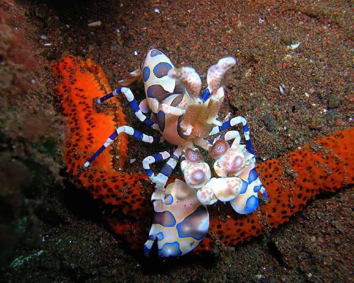 Diving Seraya - Indonesia