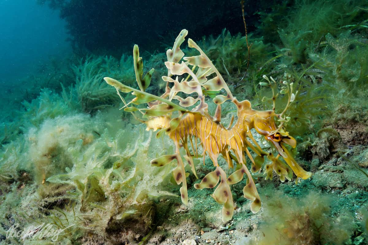 Diving South Australia