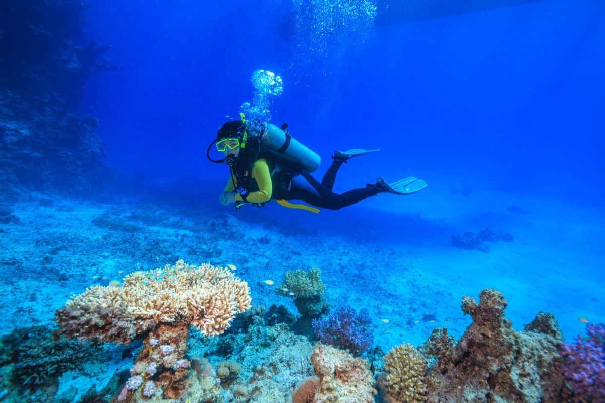experiencing liveaboard diving for single travelers