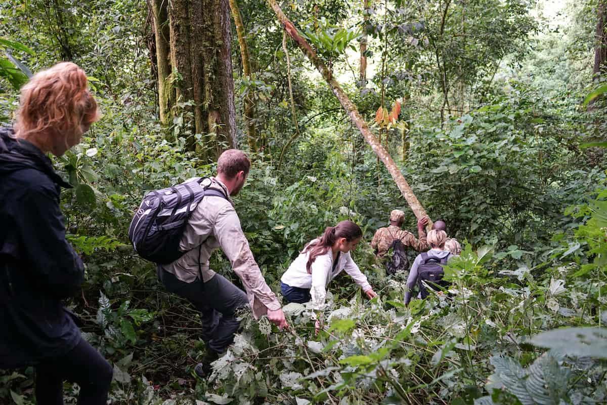 Gorila Trekking in Uganda