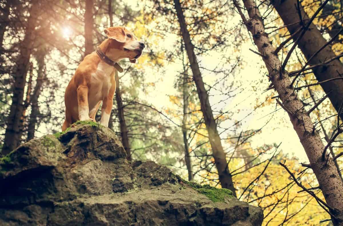 what to know when hiking with dogs