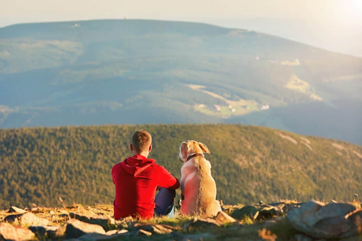 hiking experience with dogs