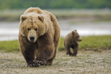 how to keep bears away