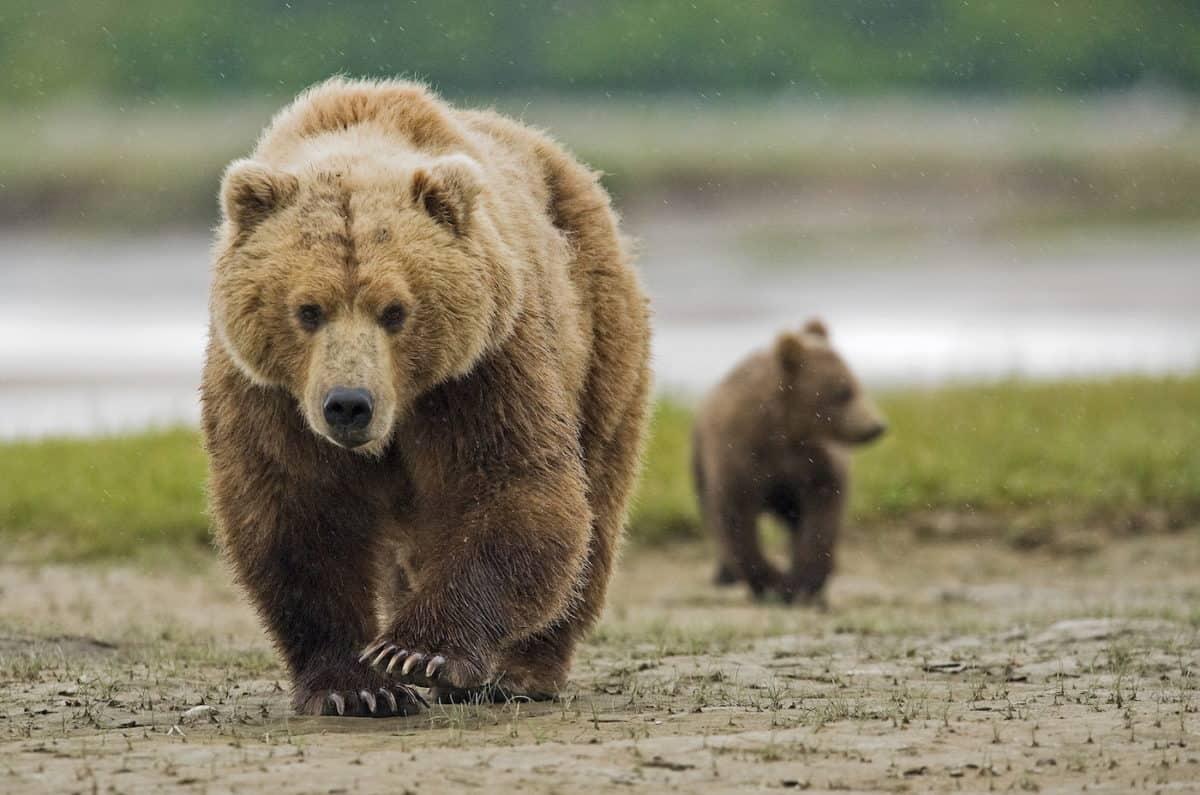 How To Keep Bears Away - The Adventure Junkies